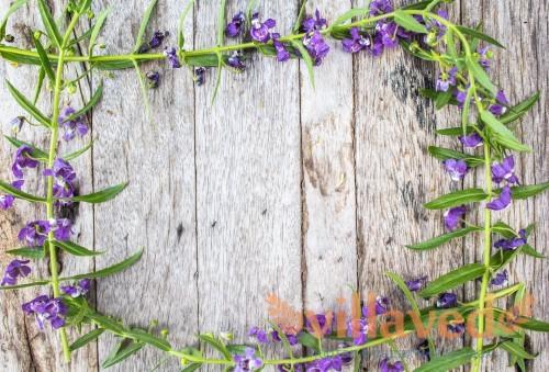 Angelonia на деревянном фоне