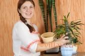 Пересадке кактуса Пахиподиума в новый горшок