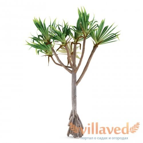 Пальма в полный рост