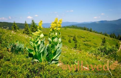 Цветок в естественных условиях