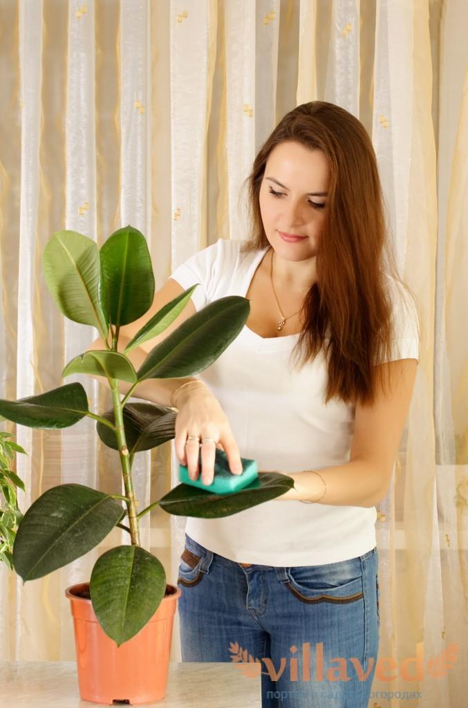 Уход за плант в домашних условиях