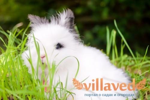 Шерсти у кроликов может быть до 1 кг