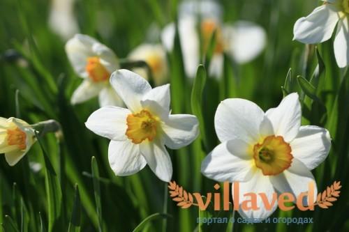 Бутоны цветка