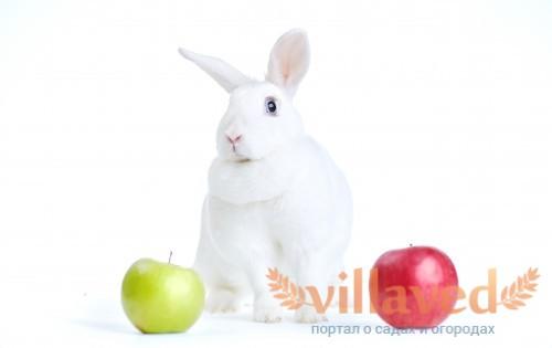 Венские белые кролики