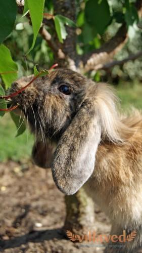 Можно ли давать кроликам листья
