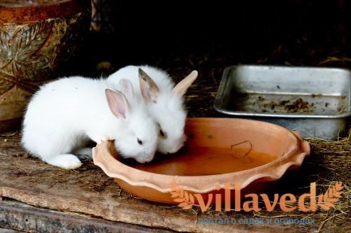 Чем поить кроликов