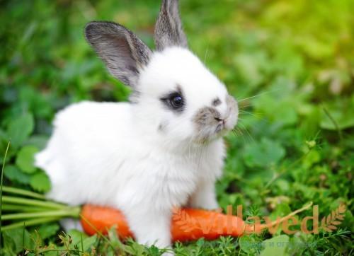Что можно давать кроликам