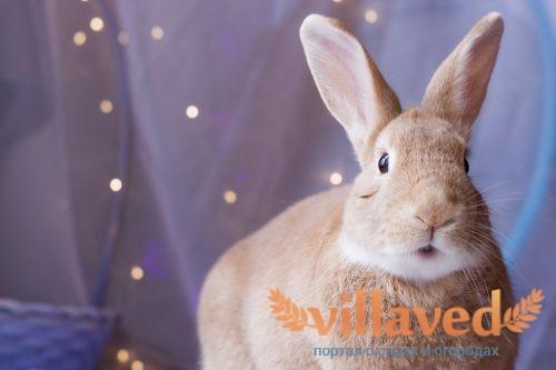 Цветной кролик