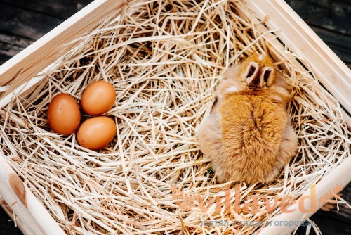 Почему крольчиха не делает гнездо