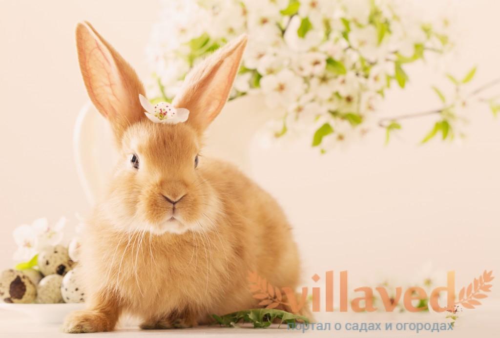 К чему снятся кролики женщине