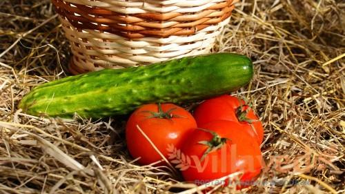 Огурцами и помидорами можно кормить без ограничений