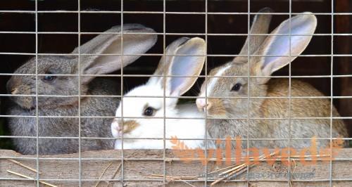 Маленьких крольчат следует отсаживать в чистые клетки