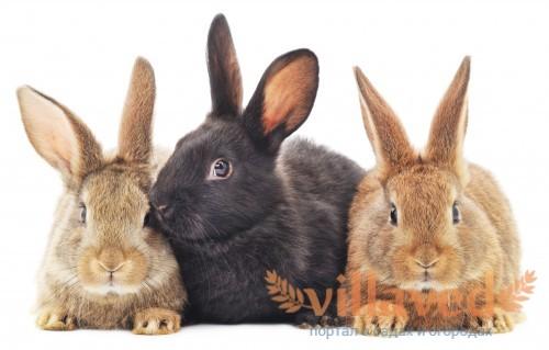 Крольчиха и кролики