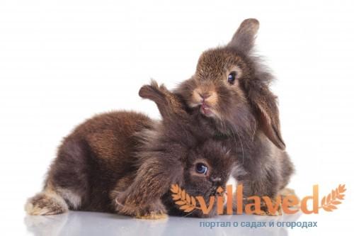Если крольчиха не кормит крольчат