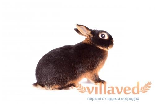 Окрас у кроликов очень необычен