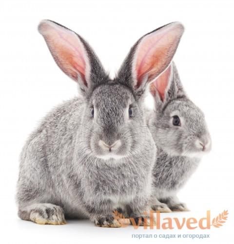 Кролики хорошо адаптируются