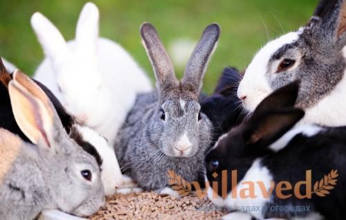 Обратите внимание на крольчат