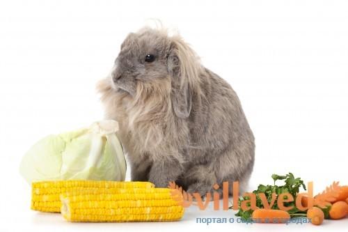Можно ли давать кроликам кукурузу
