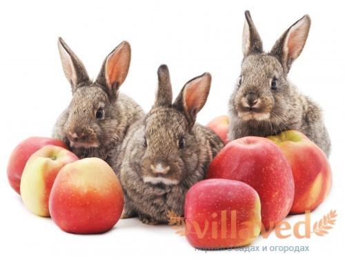 Можно ли давать кроликам яблоки