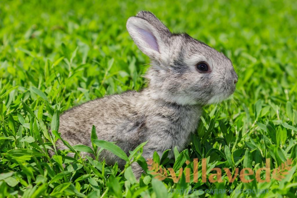 Новорожденные кролики уход и содержание