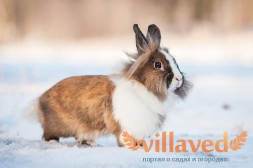Окрол кроликов зимой более предпочтителен, чем летом