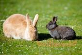 Почему крольчиха ест своих крольчат