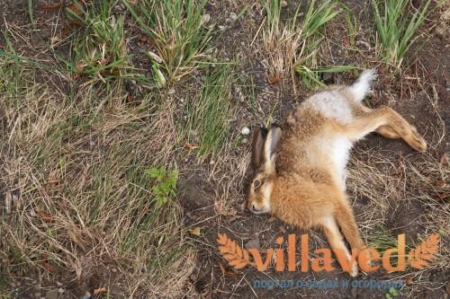 От чего погибают кролики
