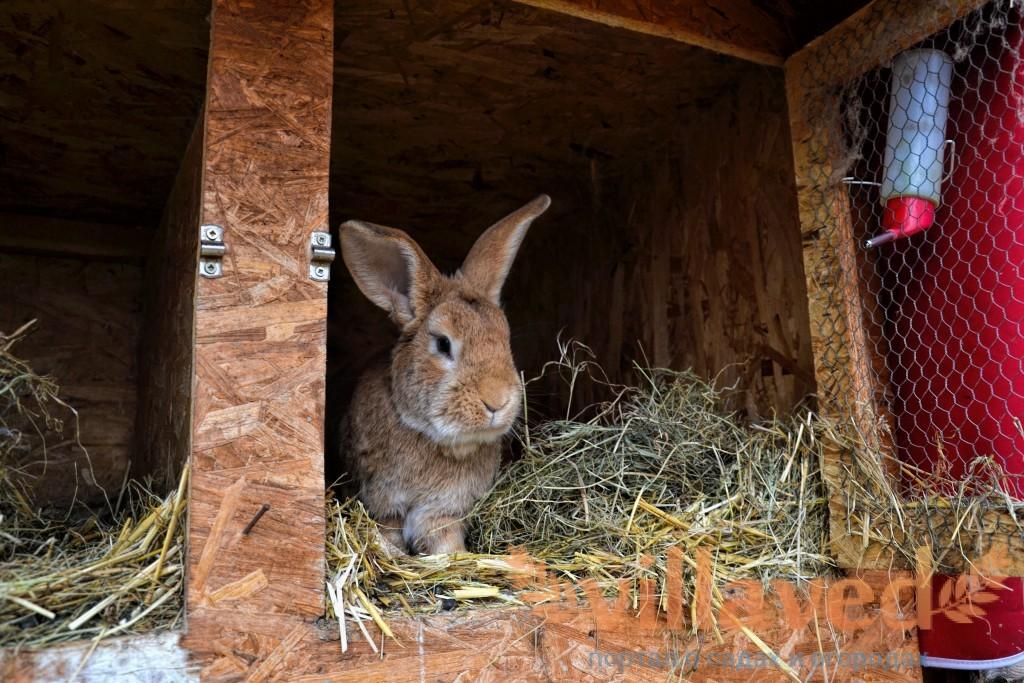 Как в домашних условиях содержать кроликов