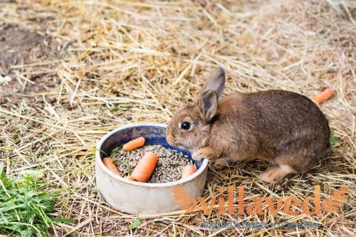 Суточная норма кормления для кроликов