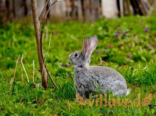 Ветки деревьев для кроликов
