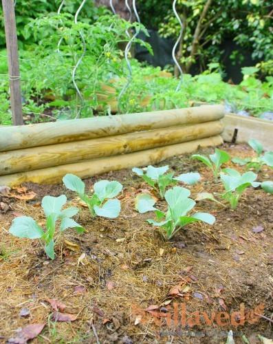 Качество почвы является очень важным для рассады