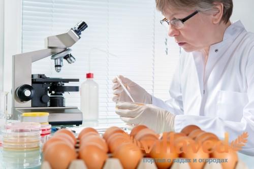 Экспертный контроль проверки качества куриных яйц
