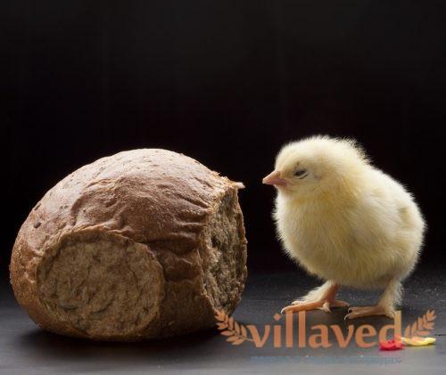 Можно ли давать курам хлеб