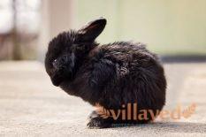 Простуда и инфекции у кроликов