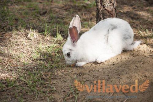 Разведения кроликов в ямах и норах
