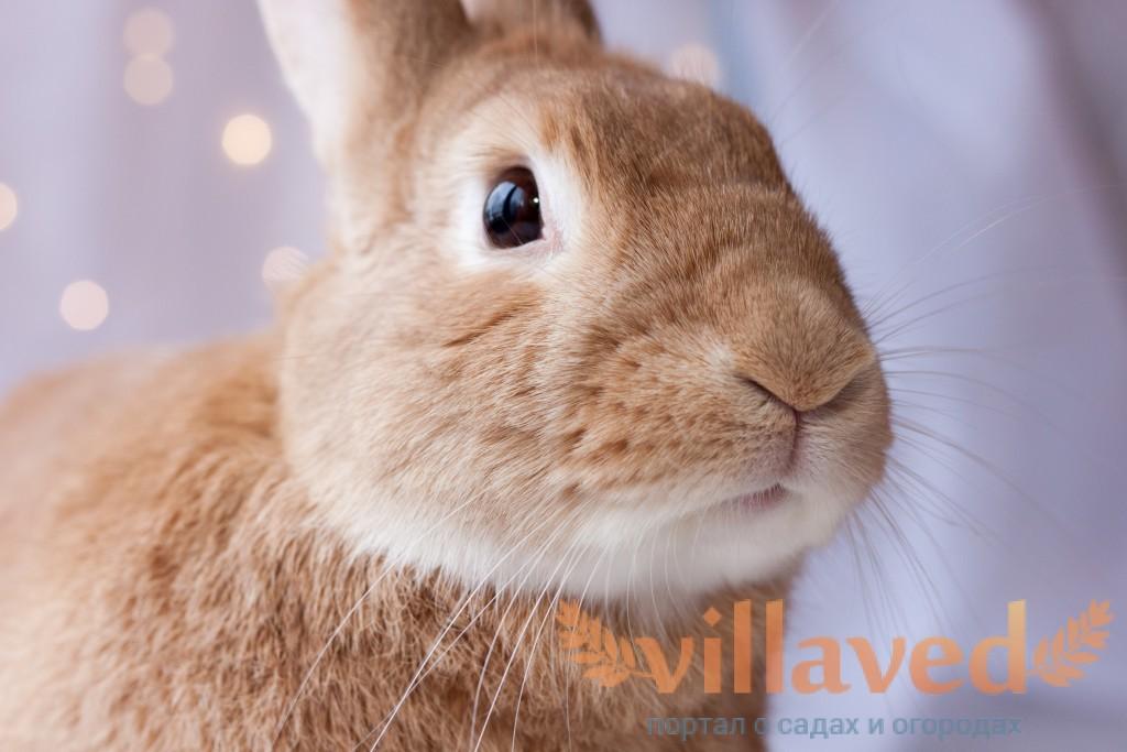 Болезни глаз у кроликов на ферме, лечение и профилактика