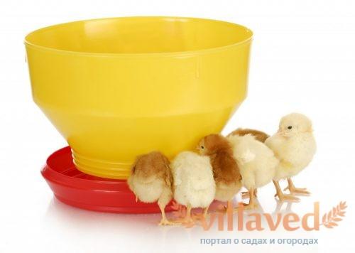 Для цыплят подойдет небольшая кормушка