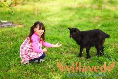 Породы коз с черным окрасом