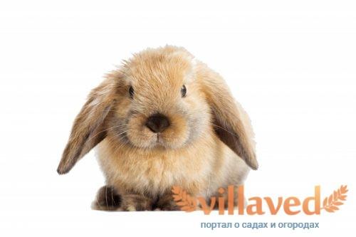 У кроликов бывает разный окрас