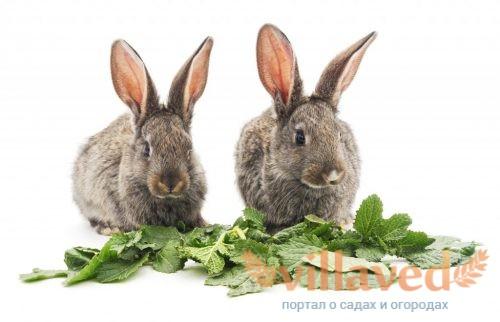Добавление кокцидиостатиков в корм кроликов