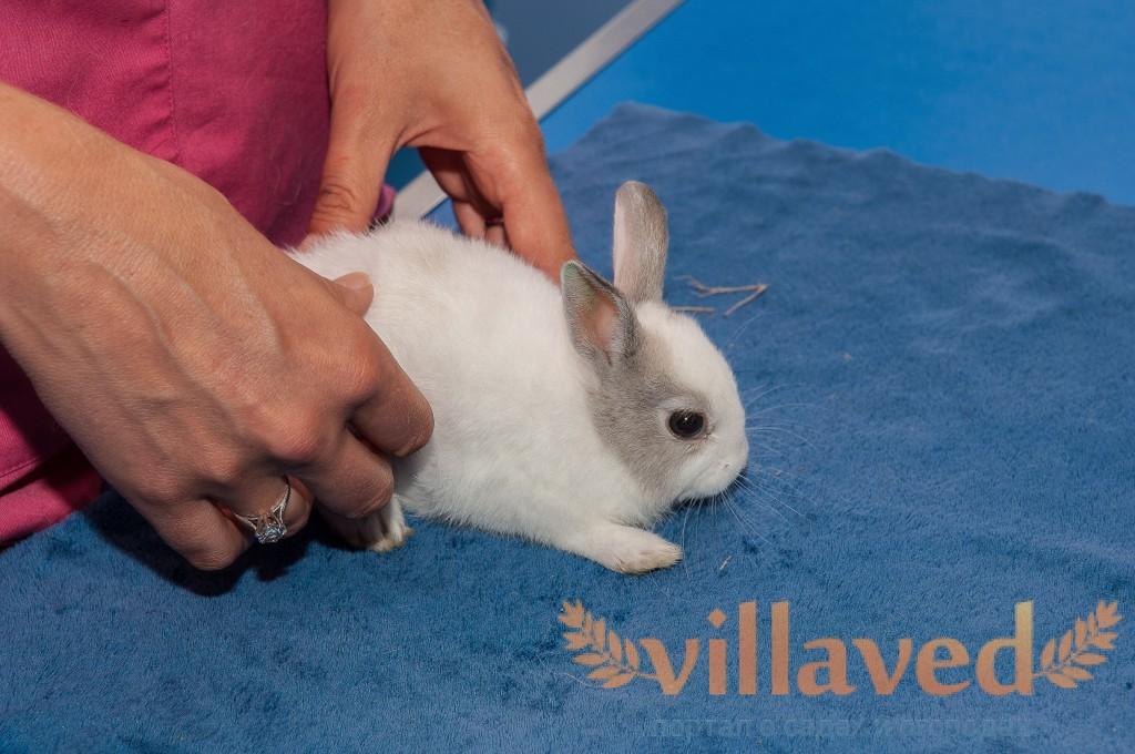 Что делать с кроликами в домашних условиях 275