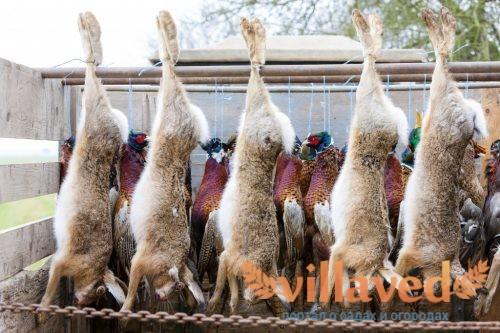 Кролики имеют ценное мясо и мех