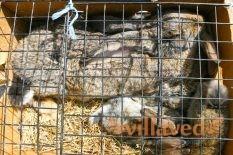 Содержания кроликов в вольерах