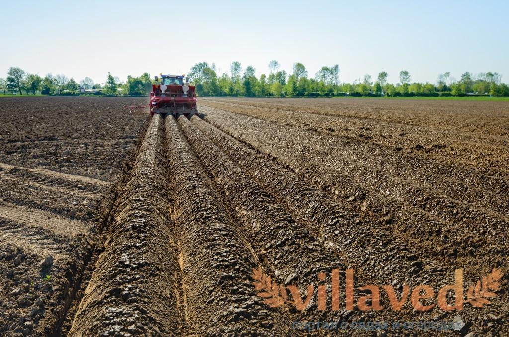 Правила посадки картофеля в гребни
