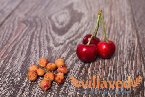 Как посадить косточки вишни