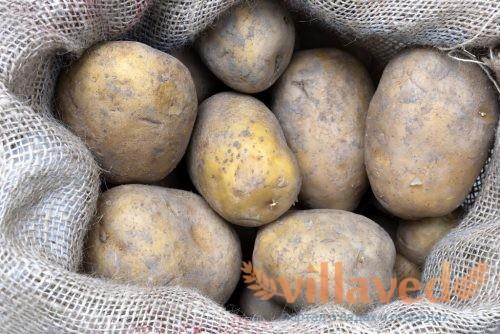 Как вырастить картошку в мешке