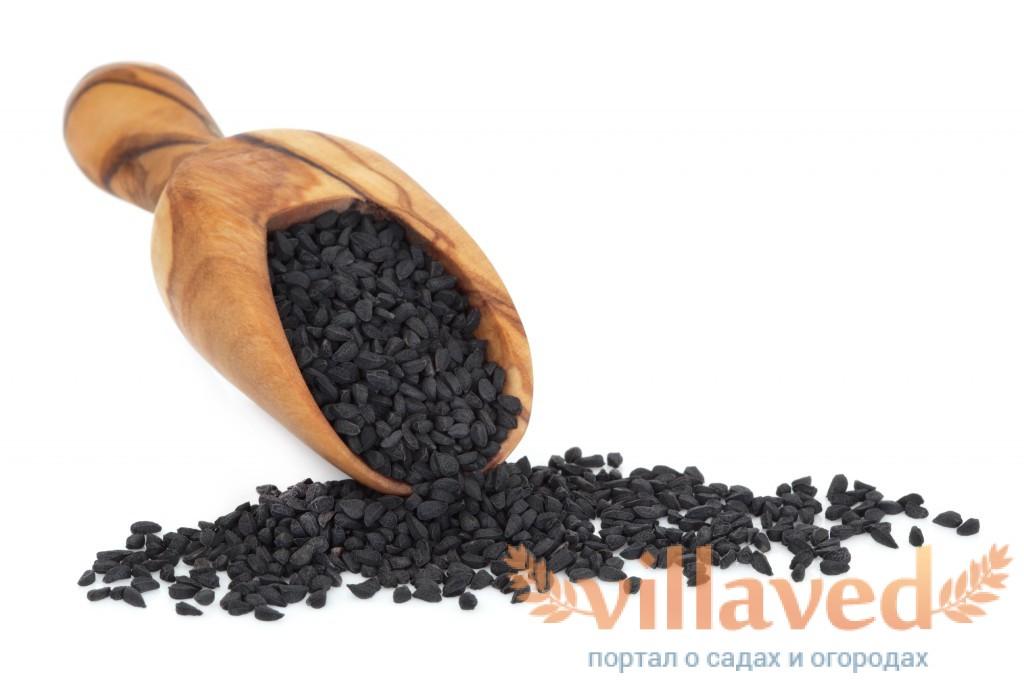 Чёрные семена лука