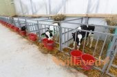 Как построить сарай (стойло, хлев) для быков и коров