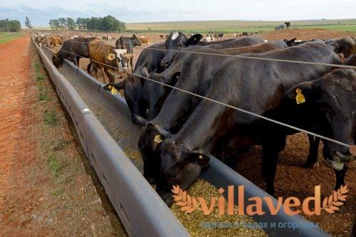 Поилки и кормушки для коров