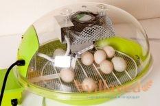 Температура в инкубаторе для куриных яиц при выводе цыплят